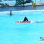 Hướng dẫn bơi sải – Kỹ thuật bơi sải cơ bản